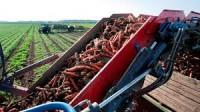 Zbiory warzyw okolice Lipska dam sezonową pracę w Niemczech od września
