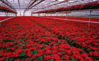 Niemcy praca od zaraz sezonowa bez języka w ogrodnictwie przy kwiatach w Dreźnie