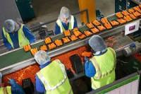 Ogłoszenie pracy w Niemczech bez języka przy pakowaniu warzyw Kolonia