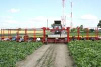 Sezonowa praca w Niemczech Dortmund bez języka od zaraz zbiory warzyw