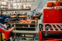 Ogłoszenie fizycznej pracy w Niemczech bez języka dla par sortowanie owoców Essen