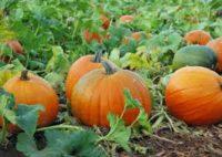 Od zaraz sezonowa praca Niemcy zbiory warzyw bez znajomości języka Prenzlau