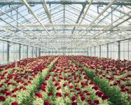Ogrodnictwo 2017 od zaraz praca w Niemczech bez języka przy kwiatach Straelen