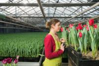 Ogrodnictwo Niemcy praca od zaraz przy kwiatach bez języka Straelen
