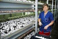 Sezonowa praca Niemcy od zaraz zbiory pieczarek bez znajomości języka Budziszyn