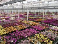 Od zaraz dam sezonową pracę w Niemczech bez języka ogrodnictwo Löbau