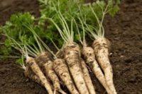 Od zaraz oferta sezonowej pracy w Niemczech zbiory warzyw bez języka Dortmund
