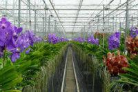 Dam sezonową pracę w Niemczech ogrodnictwo od zaraz bez języka przy kwiatach Karlsruhe