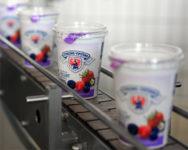 Dam pracę w Niemczech od zaraz przy produkcji jogurtów, kefirów Bingen