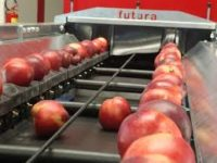Oferta fizycznej pracy w Niemczech dla par bez języka sortowanie owoców od zaraz Berlin
