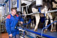 Dojarz praca sezonowa w Niemczech od zaraz dla par – rolnictwo 2019 Apen