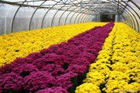 Bez języka oferta sezonowej pracy w Niemczech ogrodnictwo przy kwiatach od zaraz Westfalia