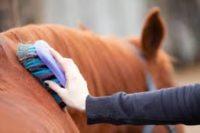 Dam pracę w Niemczech przy koniach od zaraz bez języka w Nürtingen – południe kraju