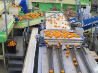 Oferta fizycznej pracy w Niemczech bez języka sortowanie owoców od zaraz Hanower