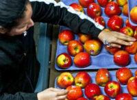 Dam fizyczną pracę w Niemczech od zaraz sortowanie owoców bez języka Hanower